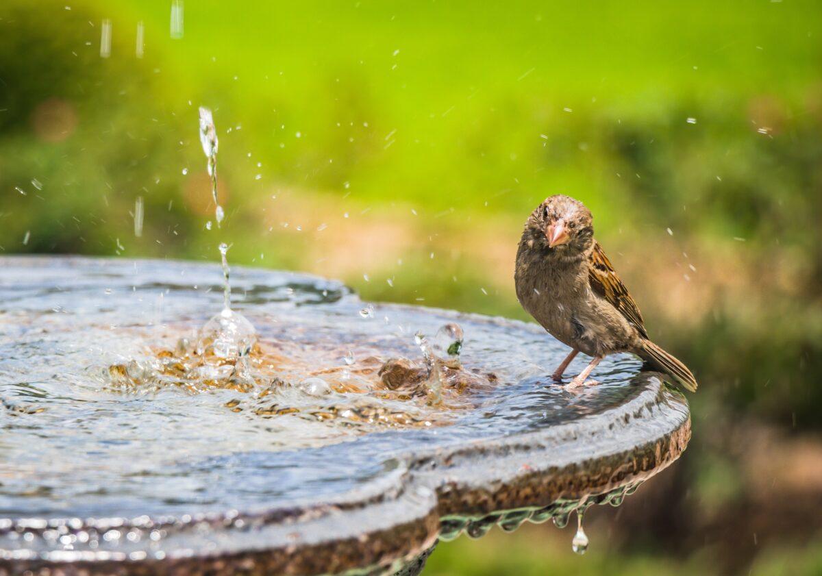 Tien tips voor een vogelvriendelijke tuin