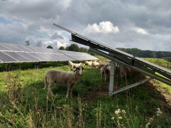 Utrechtse natuur- en milieuorganisaties: 'Pas duurzame energie zorgvuldig in'
