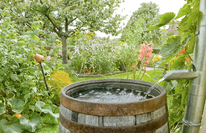 Webinar: Jouw tuin klimaatproof – De watervriendelijke tuin