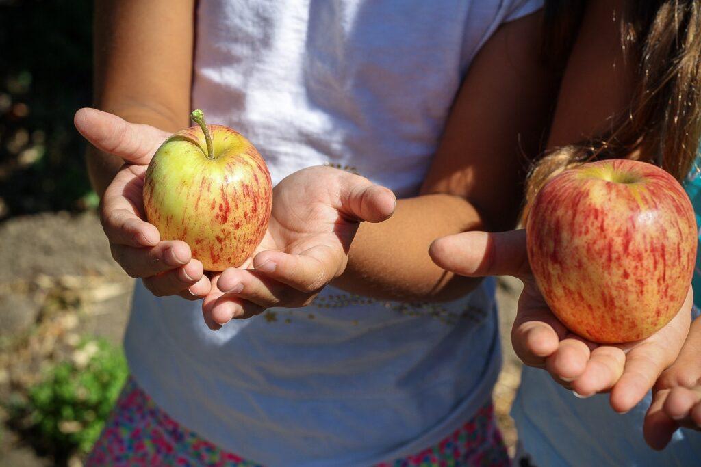 Manifest Gezonde Voeding: meer groenten en fruit, minder vlees