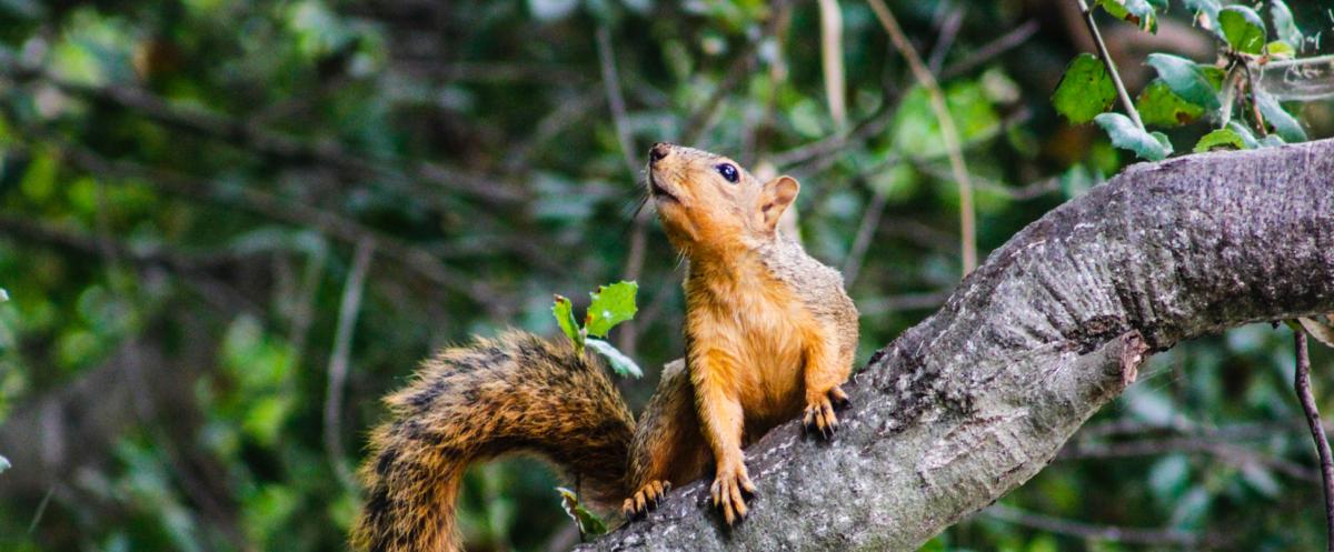 5 tips voor een eekhoornvriendelijke tuin